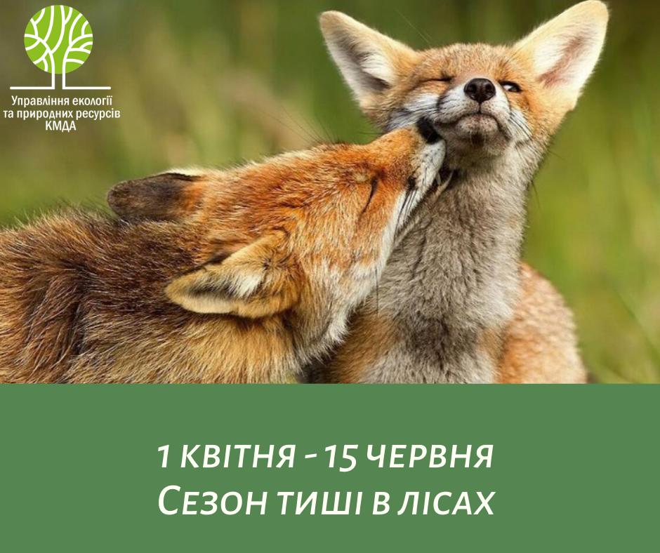 З 1 квітня у міських лісах розпочинається «сезон тиші» з метою ...